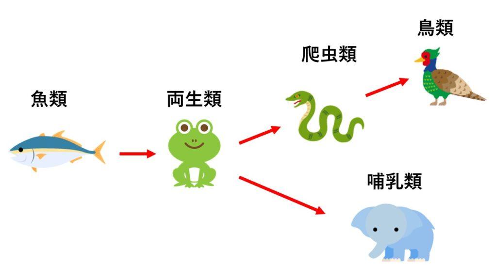 進化の過程イメージ図