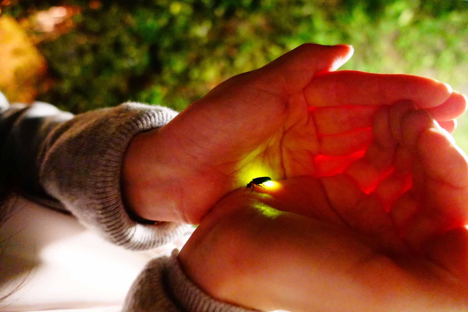 手の中のホタル