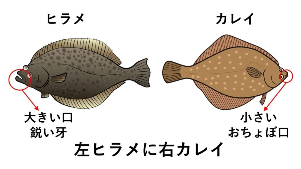左ヒラメに右カレイの図