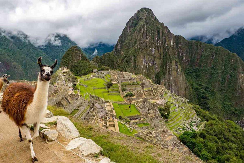 マチュピチュ(ペルー)のラマ