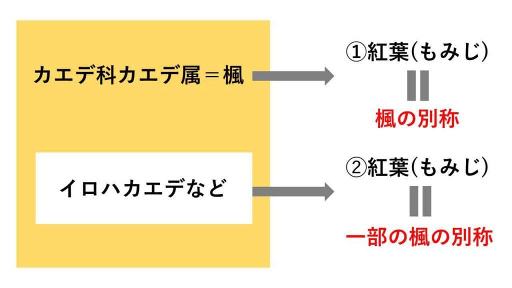 楓と紅葉の関係図