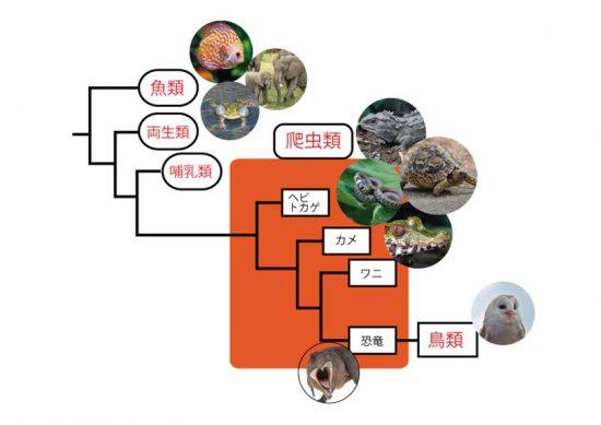 爬虫類の分類