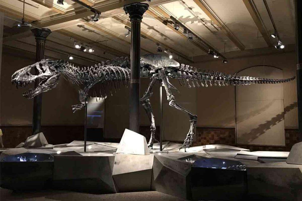 ティラノサウルスの骨格標本
