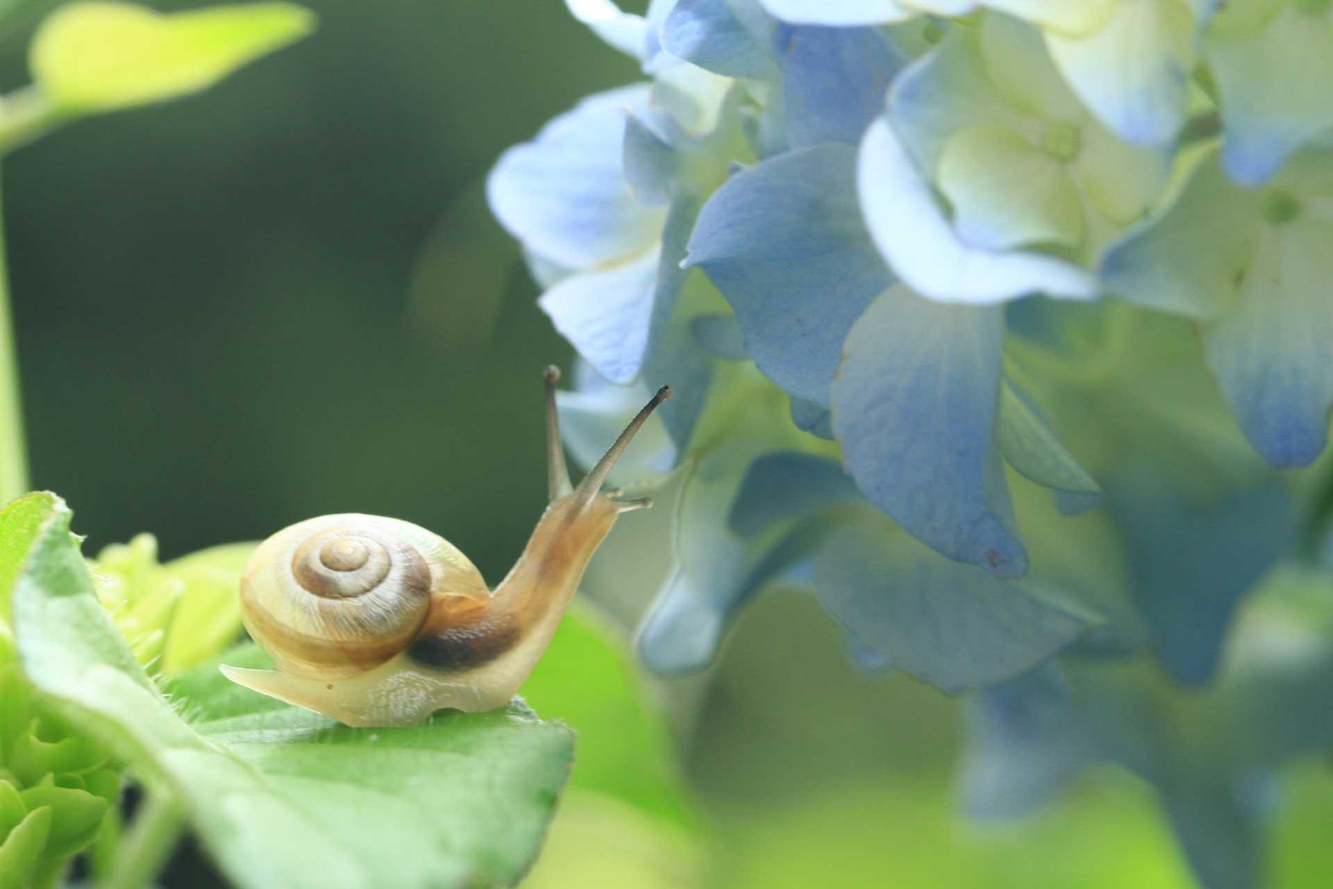 花とカタツムリ