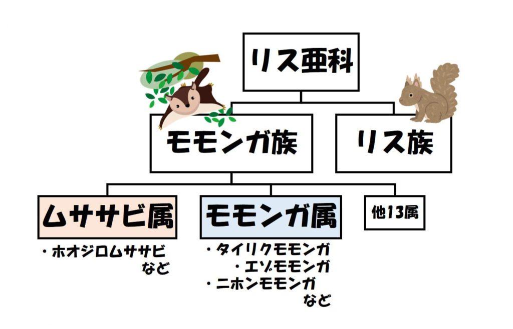 ムササビとモモンガの分類