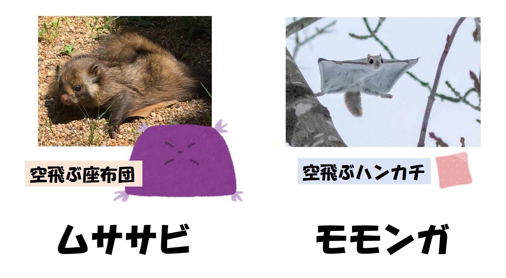 ムササビとモモンガ