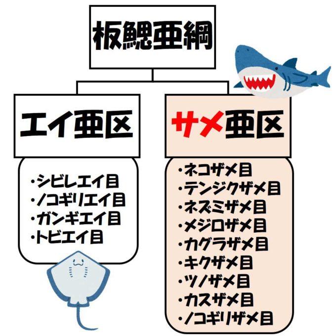 サメとエイの分類の解説図