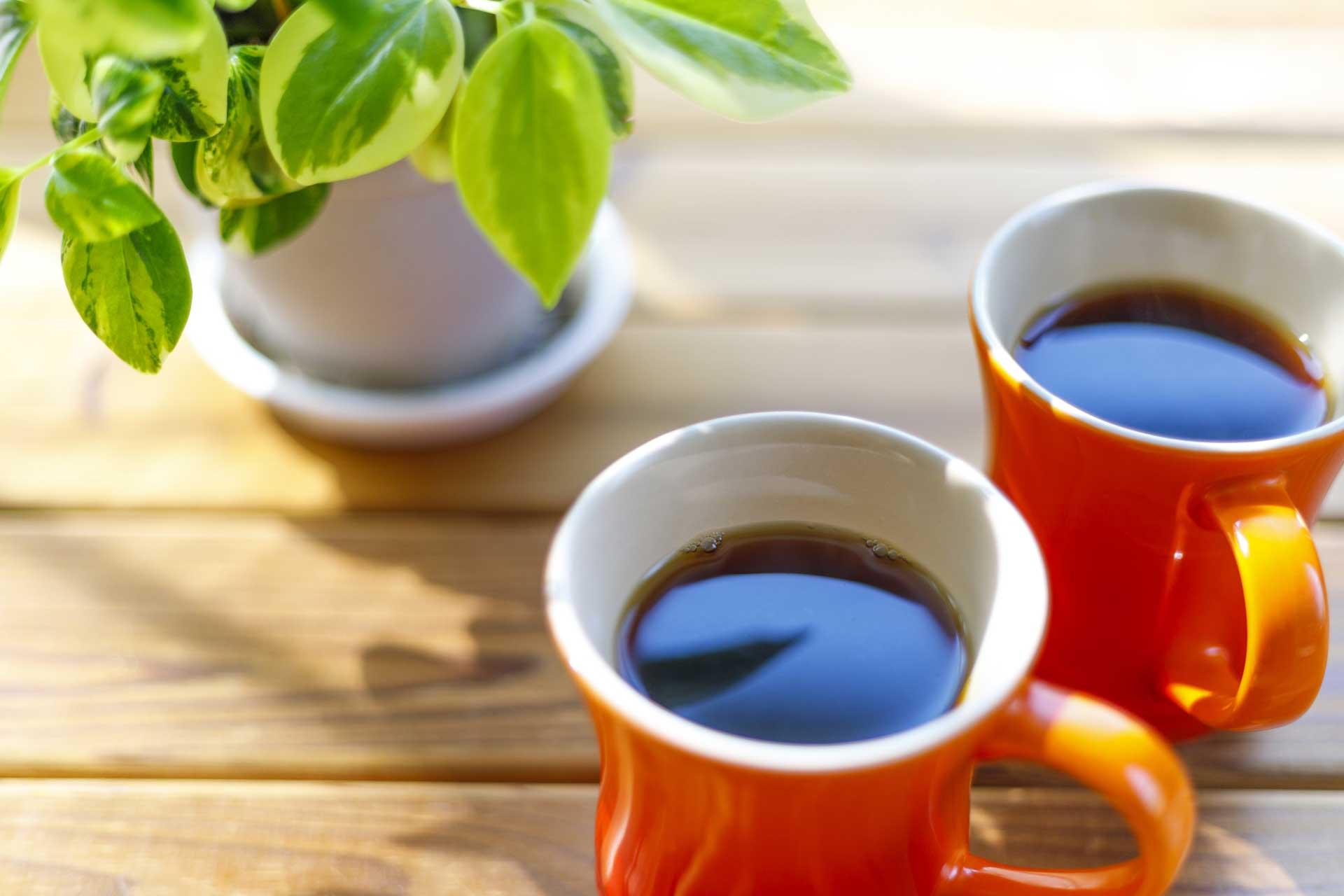 コーヒーと植物