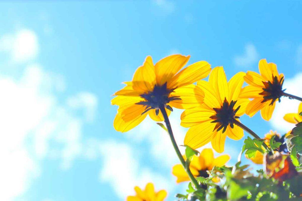 空に向かって生える黄色い花