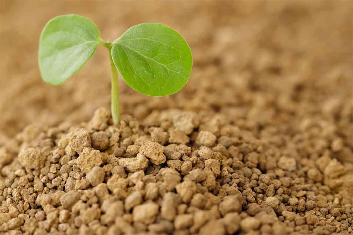 土に生えた新芽