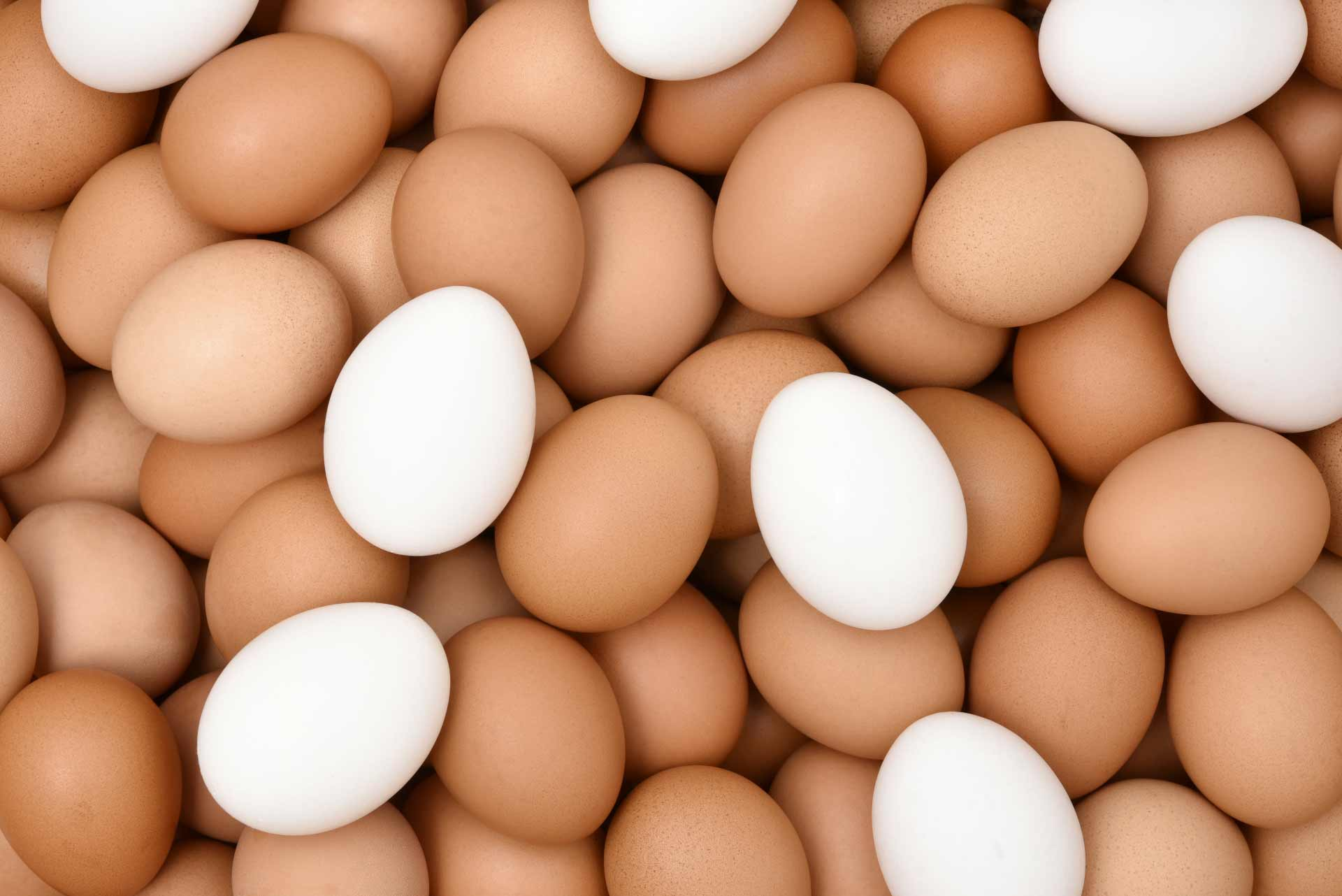 白色の卵と茶色の卵