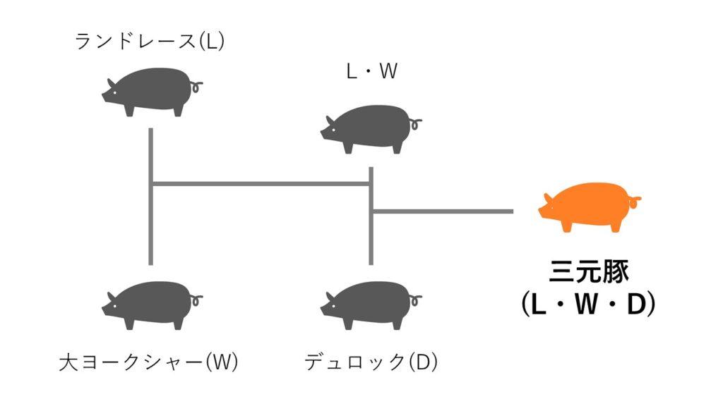 三元豚の交配
