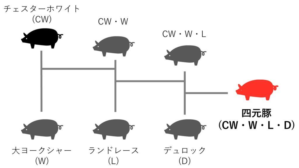 四元豚の交配