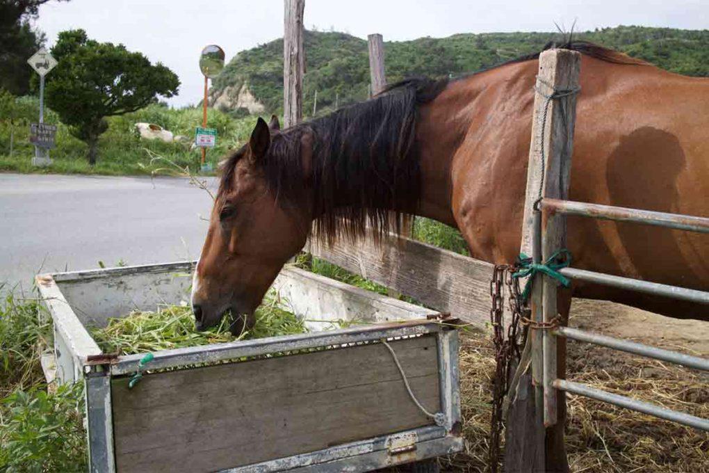 馬槽からエサを食べる馬