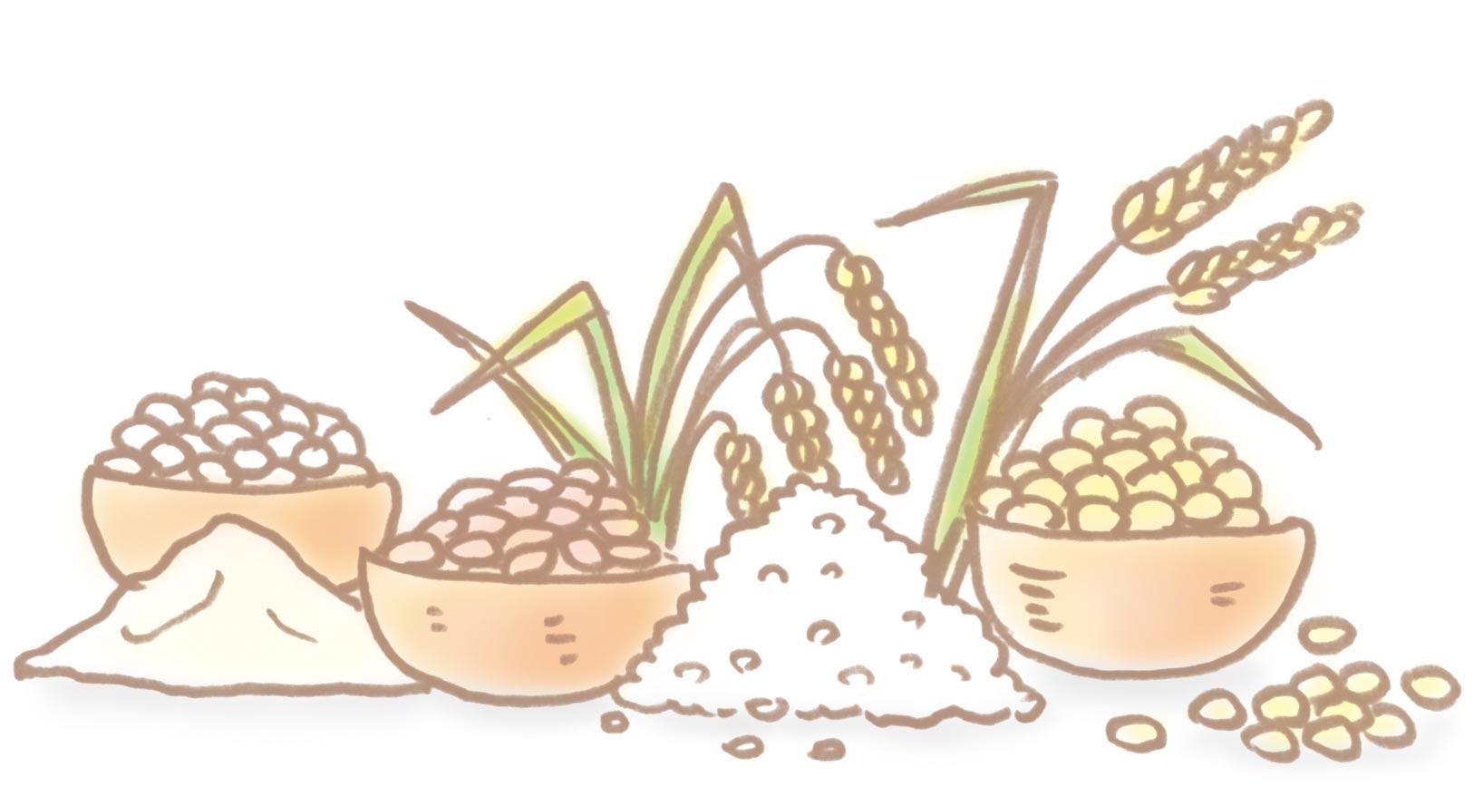 穀物のイラスト