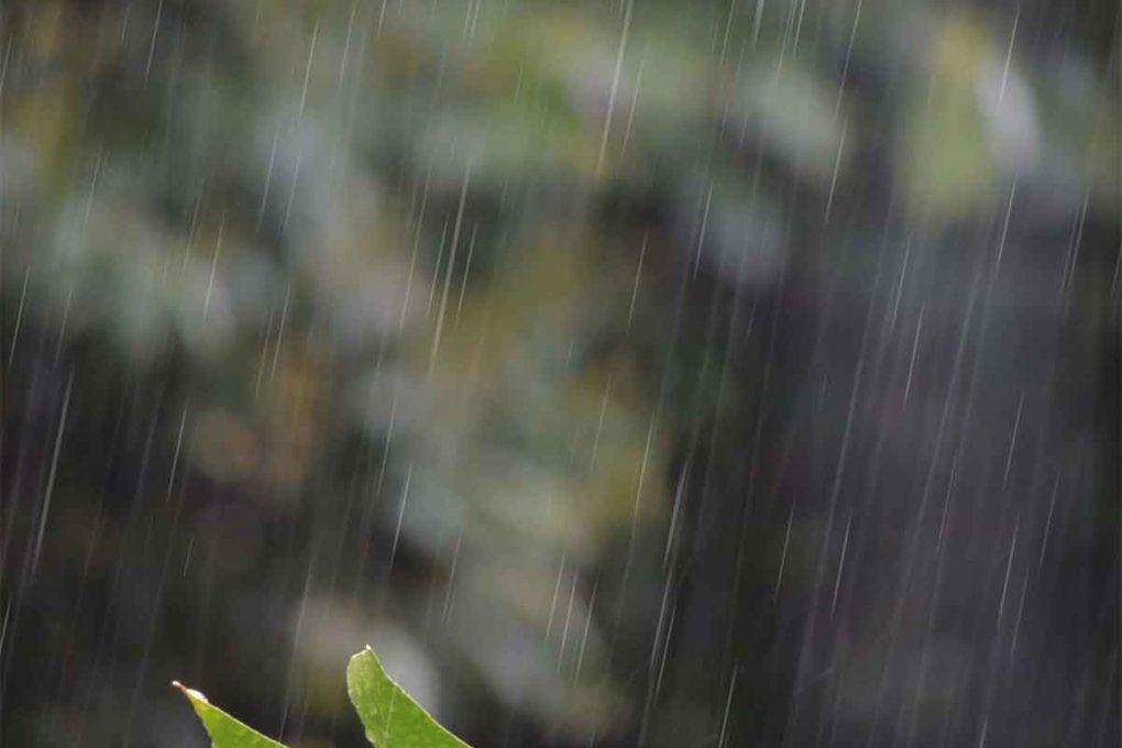 雨が降っている景色