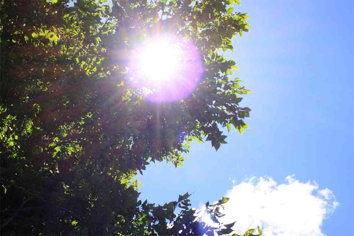 木から見える太陽