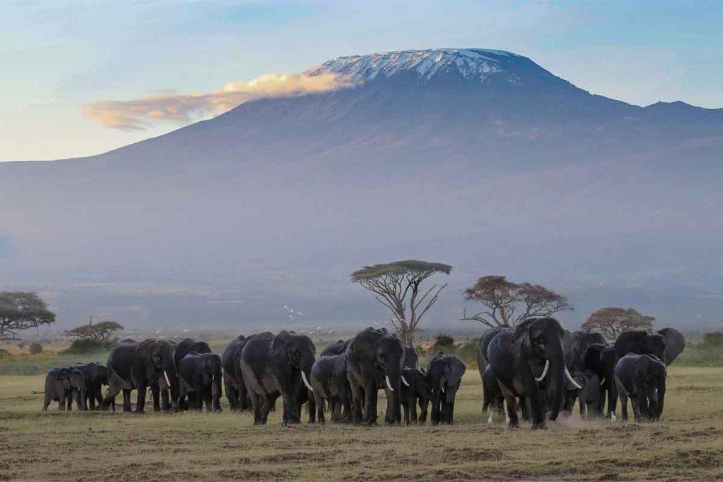 キリマンジャロ公園(タンザニア)